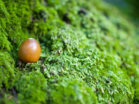 Acorns growing up in the Korean woods