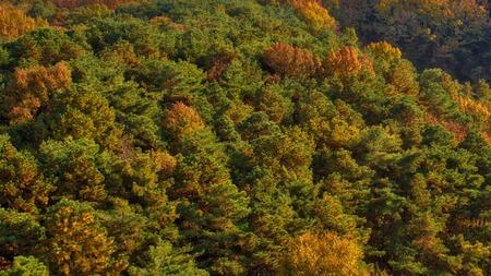 Forest scenery of Korea Cheongju city