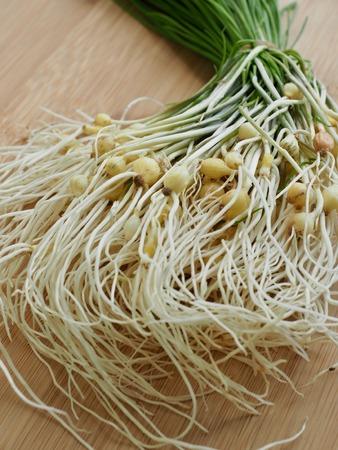 Korean food ingredients wild chive Stockfoto