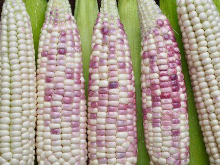 Korea's Fresh Organic Corn, background