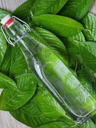 Glass carafe and green leaves Zdjęcie Seryjne