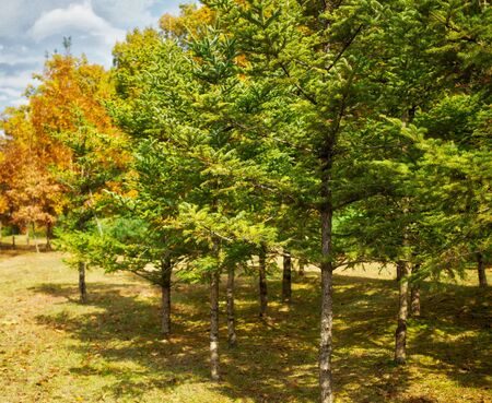 Autumn pine landscape in korea Foto de archivo - 129863832