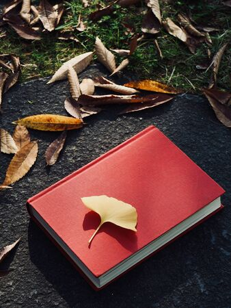 Books and autumn maple leaves, Ginkgo leaves, fallen leaves 版權商用圖片