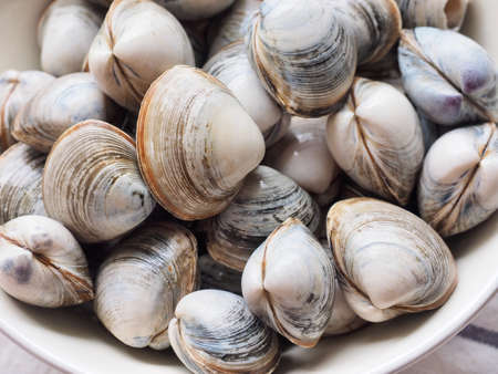 Fresh sea natural food clam