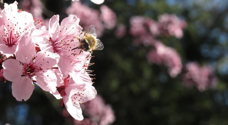 Bee absorbing pollen of a flower during the day photo