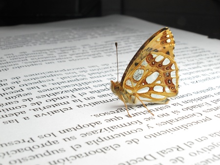 a small orange and silver butterfly on a newspaper photo
