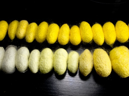 freshly cocoons row order by color photo