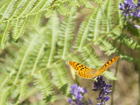a Orange butterfly perched on green flowers in the field photo