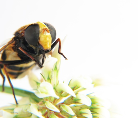 a Macro of the head of a wasp on a flower photo