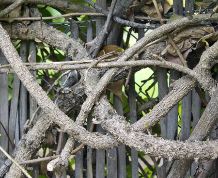 a detail of intertwined branches Stock Photo - 10651462