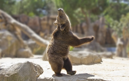 Great happy dancing bear photo