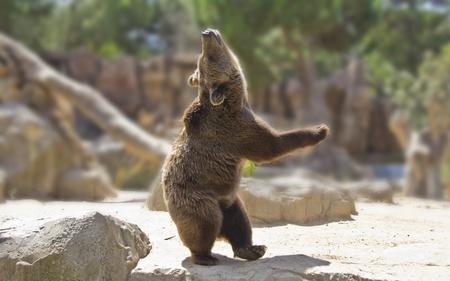 Great happy dancing bear photo