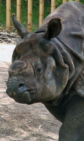 Rhinoceros impressive photo
