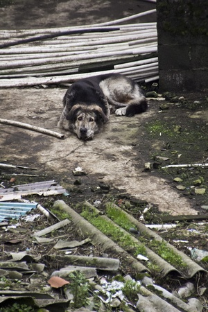 a sad dog abandoned in the streets photo