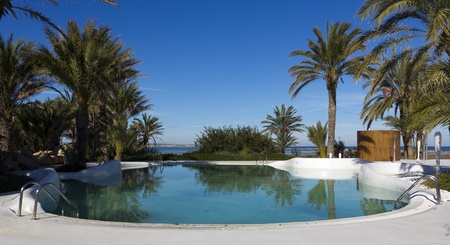 single dwellings: swimming pool with palm trees Editorial