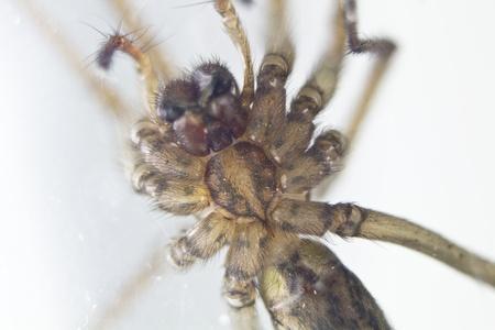 domestic spider stalking prey Stock Photo - 12350095