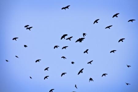 Group of birds photo