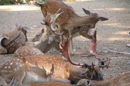 deer in their environment photo