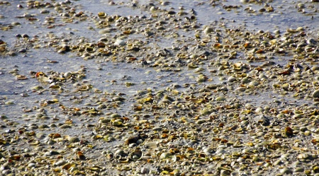Beaches formed by thousands of small shells photo
