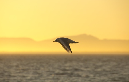 gulls flying at dusk photo