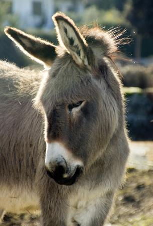 small donkey walking in a meadow
