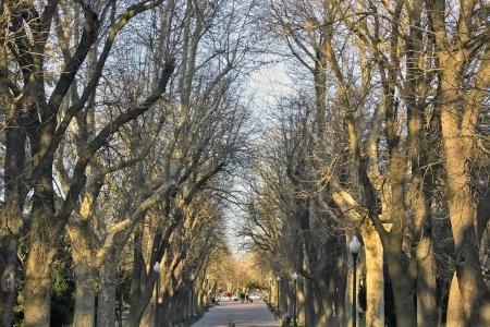 Woodland walk in a park in Avila, Spain photo