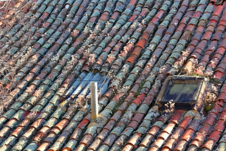 Roofs of old houses with plants photo