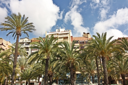 buildings and palm trees typical of the city of Alicante Spain photo