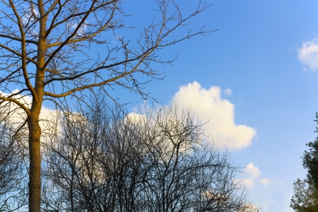 Trees without leaves on blue sky with clouds Stock Photo - 14815673