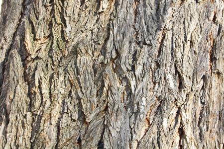 foreground tree bark Stock Photo - 14815674