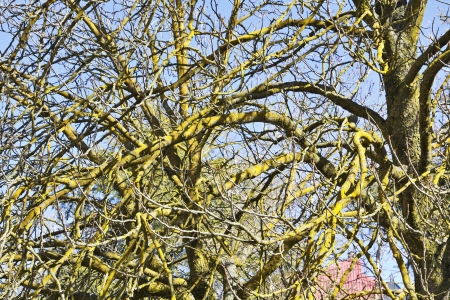 Leafless trees with moss on branches Stock Photo - 16210006