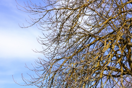 Trees without leaves on blue sky with clouds Stock Photo - 16851382