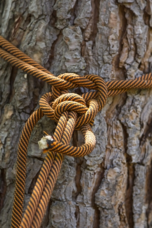 Macro climbing rope tied to a big tree photo