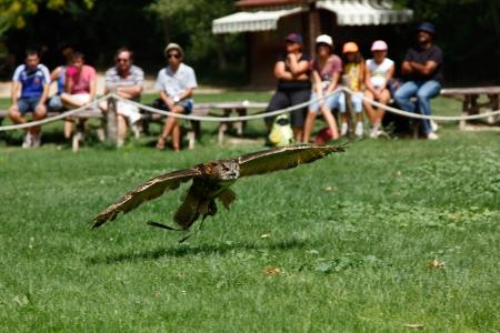 skimming: Owl desnatado de la tierra Editorial