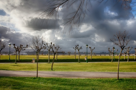 area of trees with storm threatening sky photo