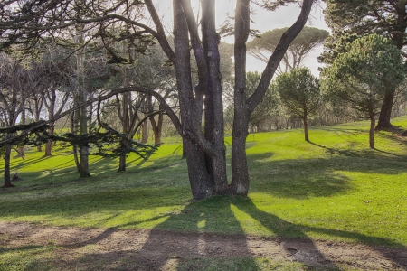 shadows of tree with several trunks at dusk photo