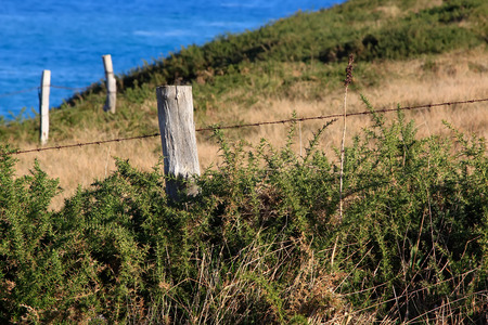 old wooden post in the fence of a meadow photo