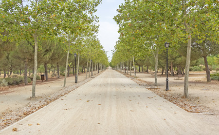 bordered: road bordered by trees Stock Photo