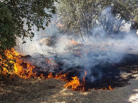 burning bush: Flames of Fire in a summer field