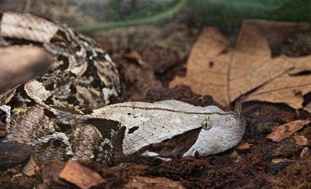 jungle green: Selva verde Serpiente