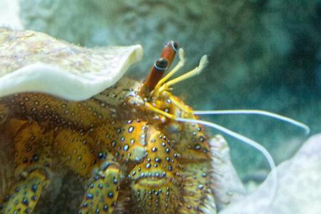 colorful sea hermit photo