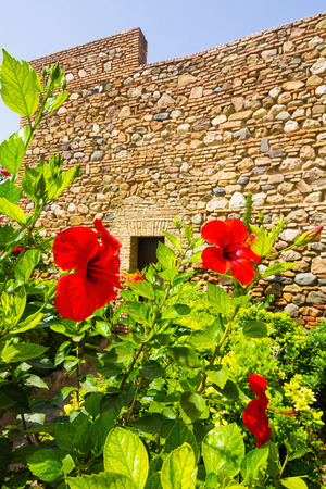 alcazaba: Courtyards and gardens of the famous of the Alcazaba in Malaga Spain