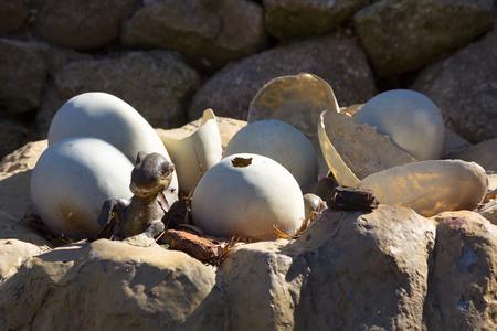 dinosaur teeth: Newly hatched dinosaur eggs