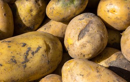 tuberosum: Solanum tuberosum background with potatoes