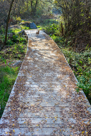 boardwalk full of leaves in a forest during autumn photo