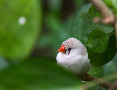 beak: white bird with orange beak Stock Photo