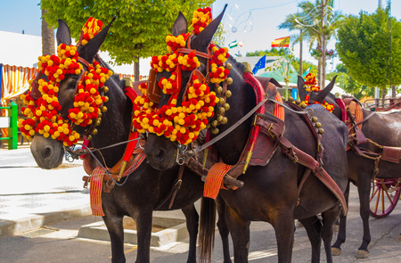 horse andalusian horses: Pretty Horses with colorful ornaments participate in the famous Andalusian Horse Fair Andujar, Spain