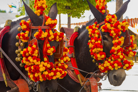 sherry: Pretty Horses with colorful ornaments participate in the famous Andalusian Horse Fair Andujar, Spain