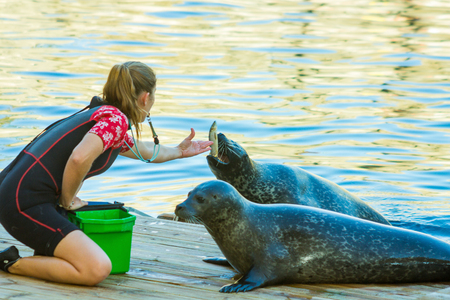 rotten teeth: MADRID,SPAIN - October, 31: Sea Lions coach performs a show with them in a theme park.  on October, 31, 2014 in Madrid, Spain