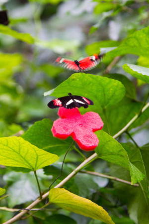 to flit: two butterflies flit and play each Stock Photo